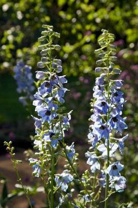 Blue Planting