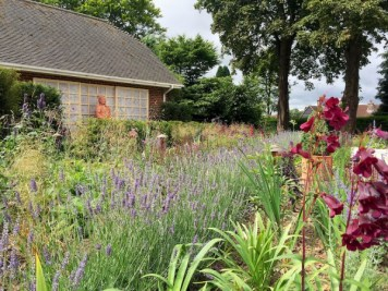 Lavender planting Haslemere