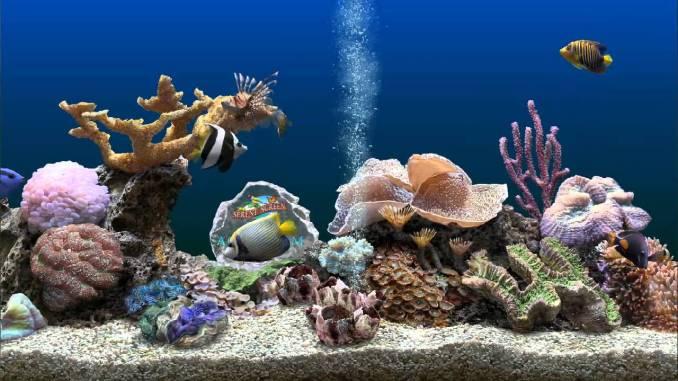 SereneScreen Marine Aquarium windows