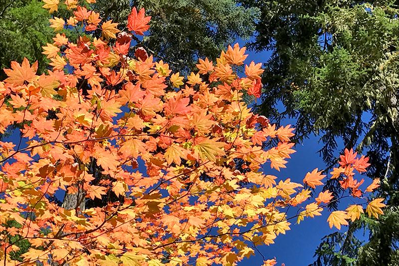 pct-pacific-crest-trail-fall-color-hiking-oregon-pctoregon.com