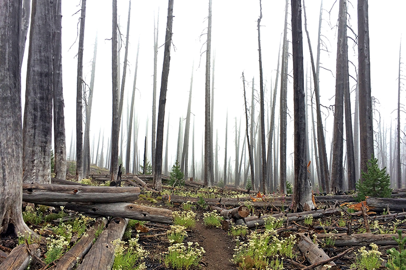 pct-pacific-crest-trail-fire-forest-charlton-butte-oregon-pctoregon.com