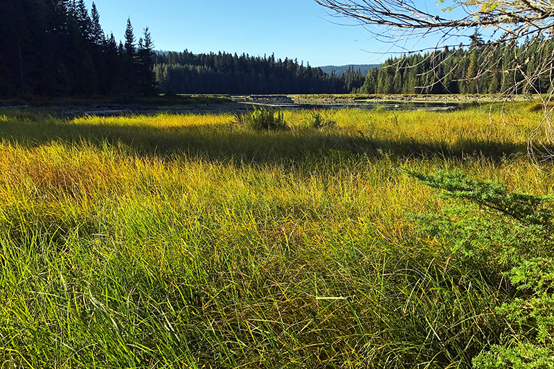 timothy meadows