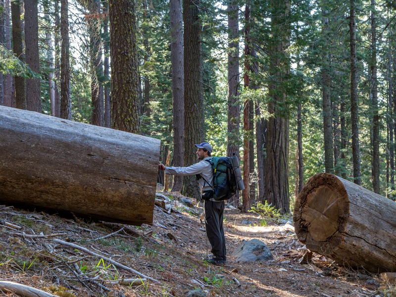A giant log-out in Shasta–Trinity National Forest.