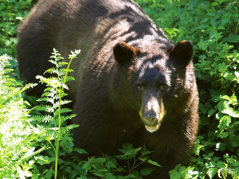 Wilderness Survival - PCT: Oregon