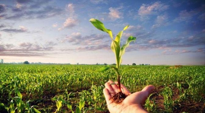 """Agricoltura biologica Piloni (PD): """"Chiederemo subito che vengano assegnate nuove risorse"""""""