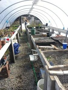 Biophilia CSA: Greenhouse in March2013