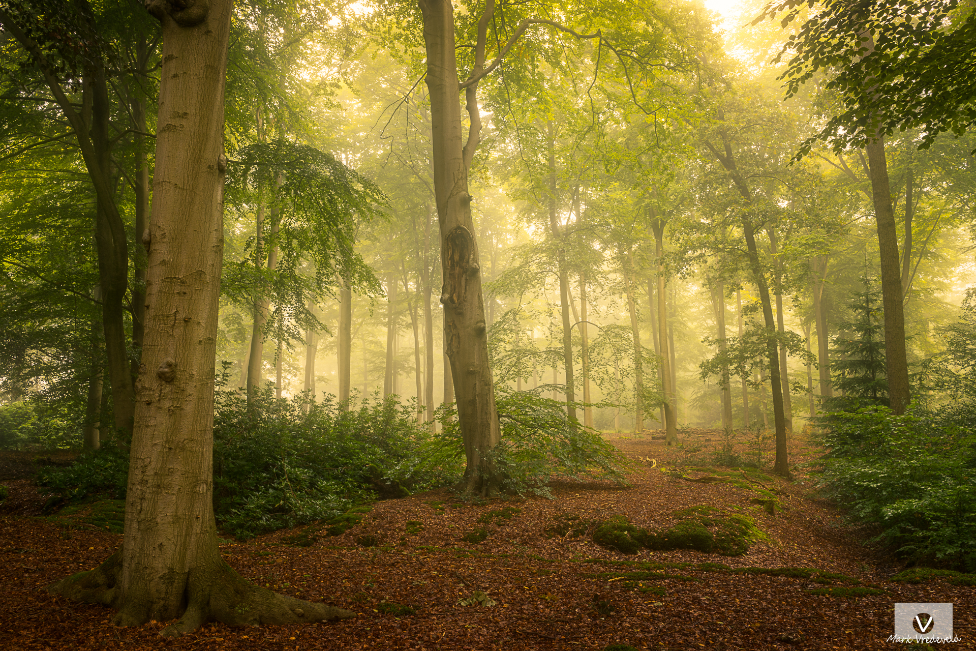 The Forest Landgoed Ampsen Lochem