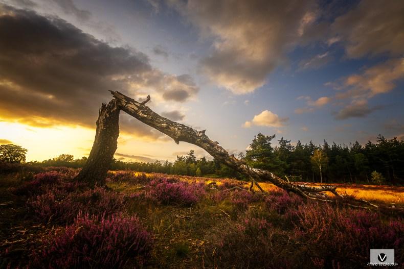 Sprengenberg - Sallandse Heuvelrug broken tree