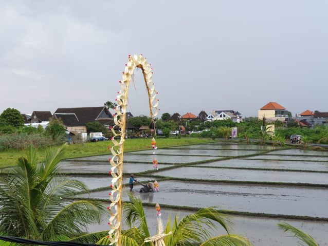 Rainy ricefields in Canggu Bali