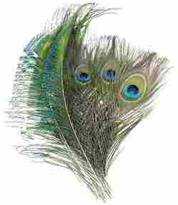 Coceca 40pcs Peacock Feathers 10-12 Inches and 20pcs Peacocks Sword 12-15 Inches for DIY Craft, Wedding Decoration