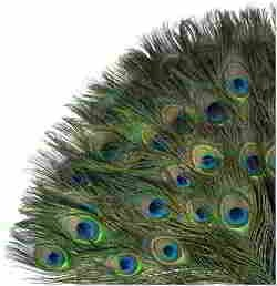 Peacock Feathers 35 Pcs, 10-12 Inches Animal Birds Craft Feathers with Big Peacock Eye