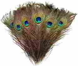 Natural Peacock Feathers 8 -10 30pcs for Craft Wedding Christmas Décor by Blisstime