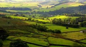 Peak District Biodiversity