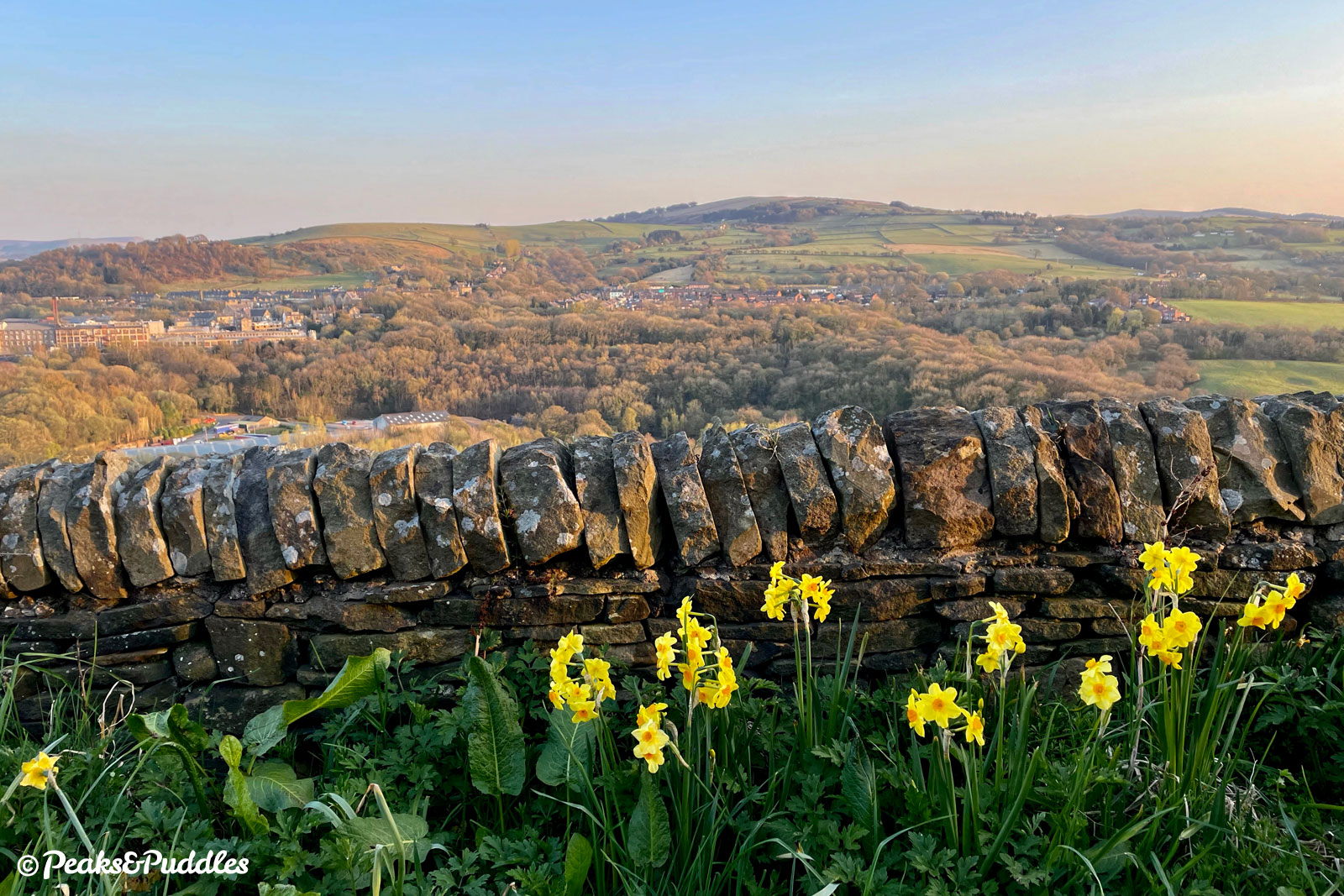 Spring narcissus with gentle evening sunlight across the valley. The Swizzels Matlow sweet factory is to the left.