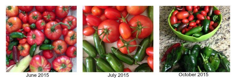 Vegetables though the season