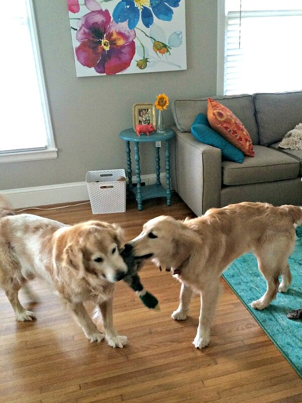 sullie and zoey play
