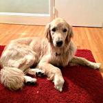 Zoey Update + Yoga Retreat Update