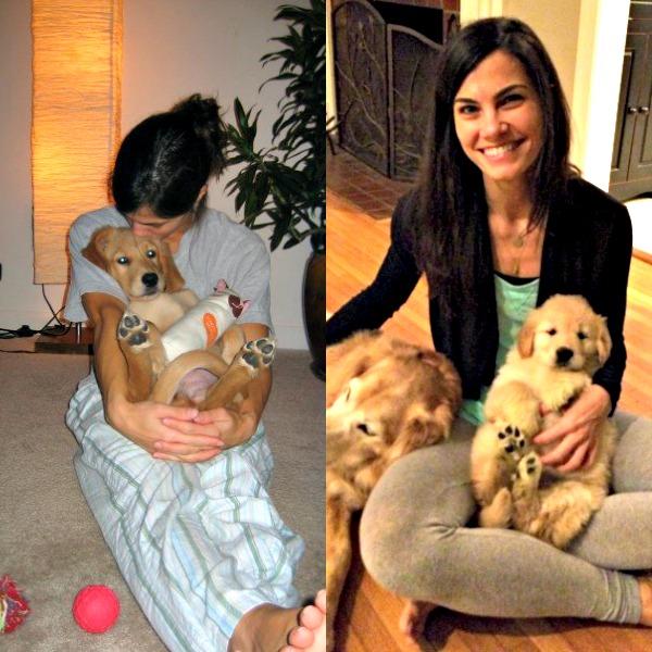 My Top 10 Tips for Raising a Golden Retriever Puppy