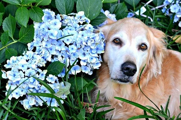 7.3sullieflowers