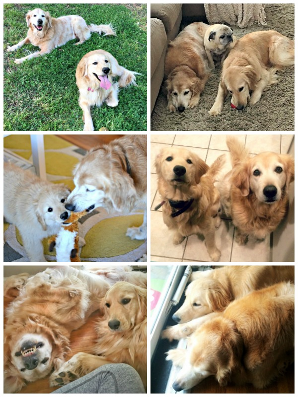 nationaldogdaycollage