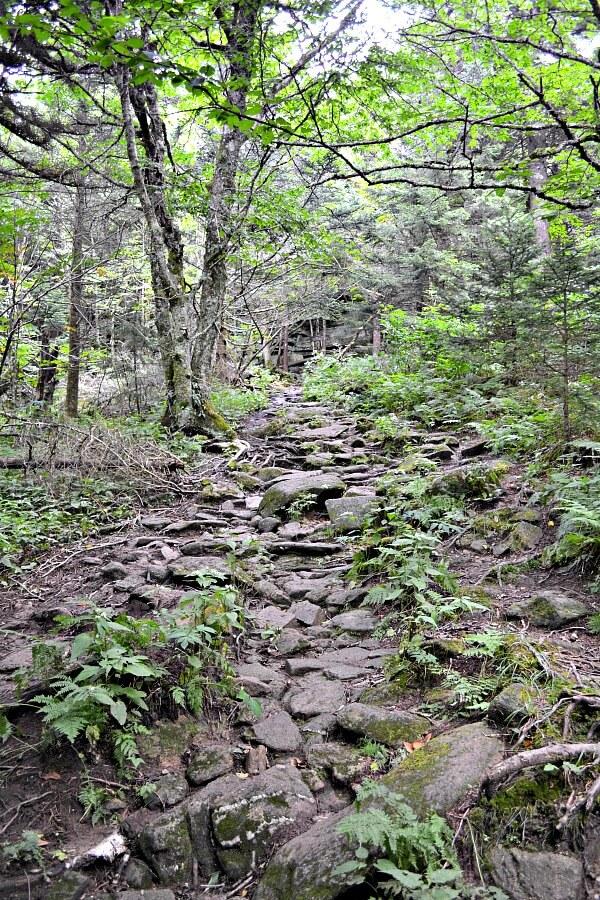 Profile Trail on Grandfather Mountain
