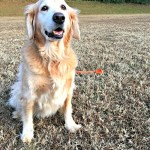 Finding Joy in the Everyday Adventures…Another Lesson Learned from the Pups!