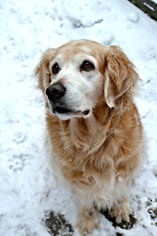 sullie in the snow