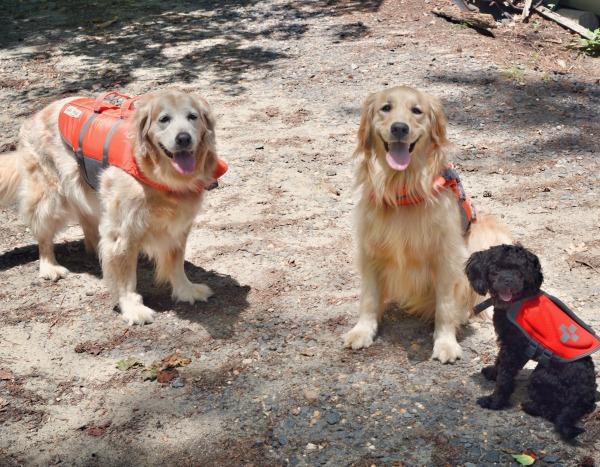 dog life jackets