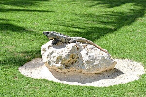 Zoetry Paraiso de la Bonita Iguana