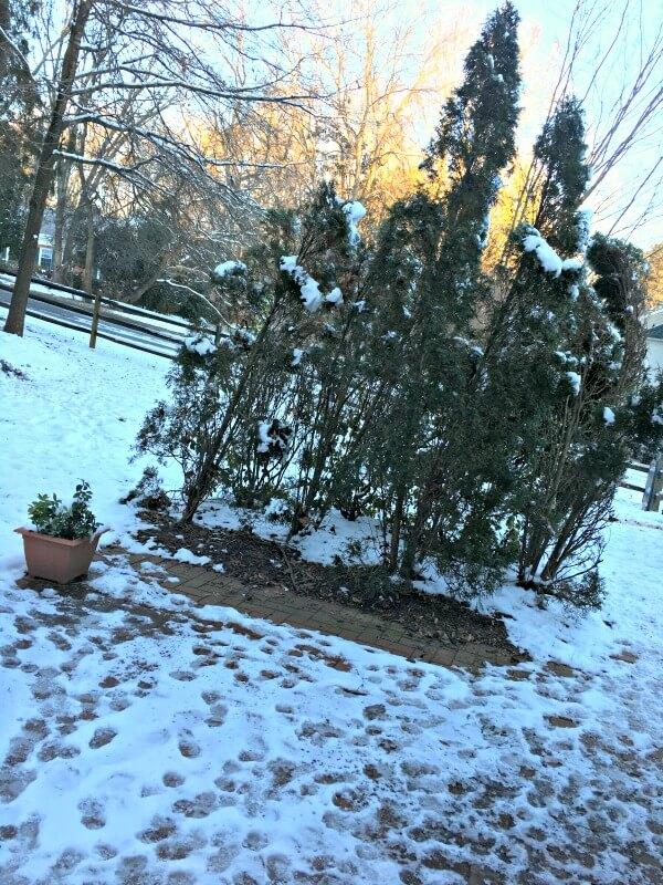 backyard snow