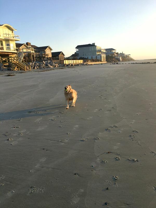 Folly Beach Dog-Friendly