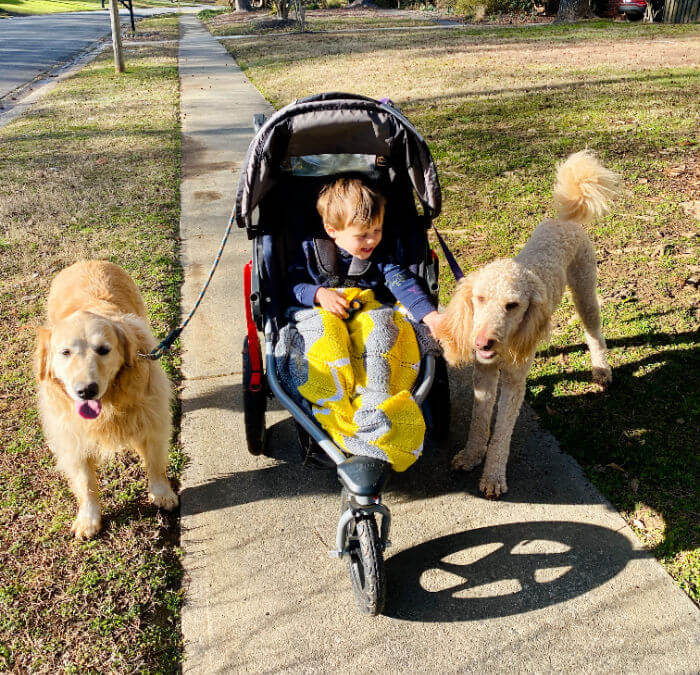 walking with dogs and a stroller