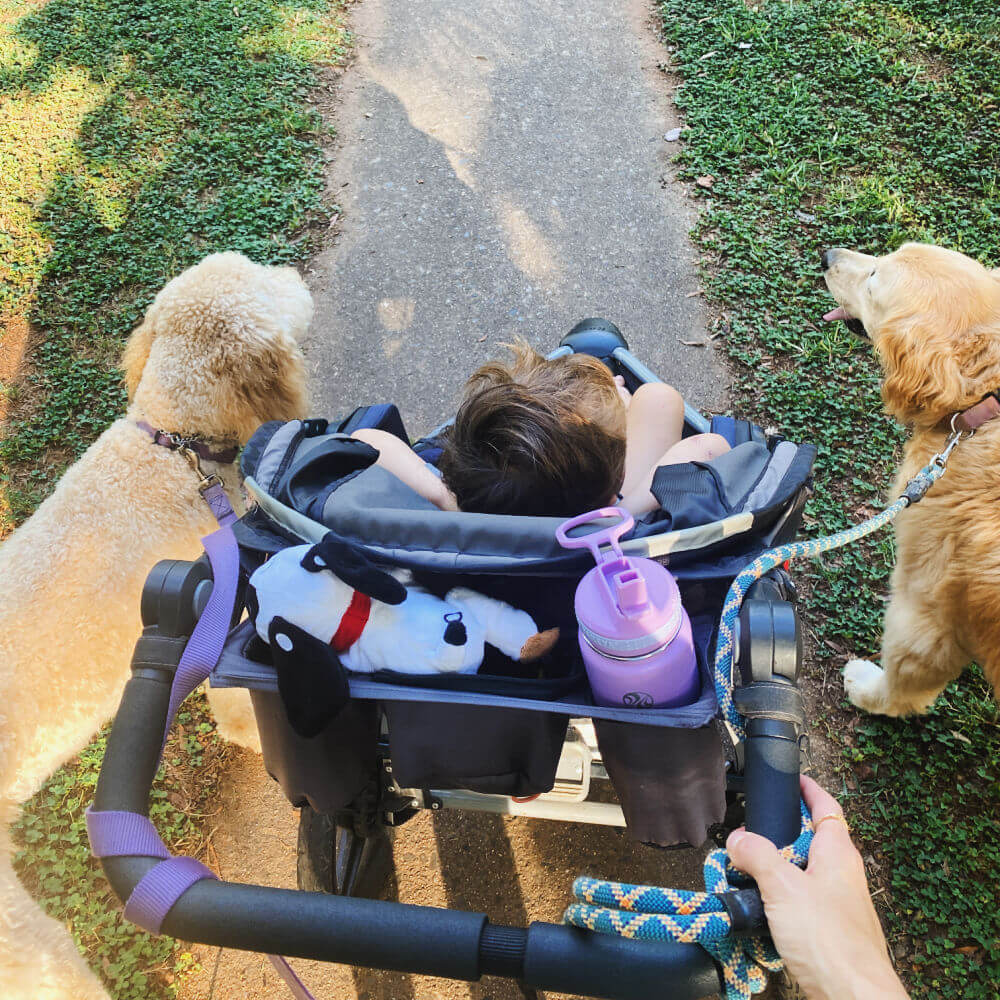 walking with dogs and a toddler