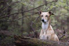 honden002