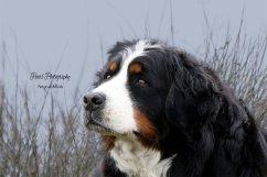 honden004