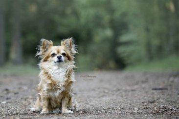 honden012