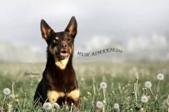 honden2003