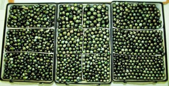 green toned tahitian pearls