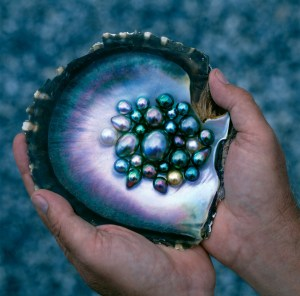 black pearls oyster