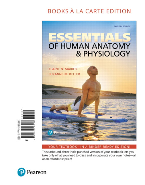 Essentials Of Human Anatomy And Physiology 7th Edition Notes ...