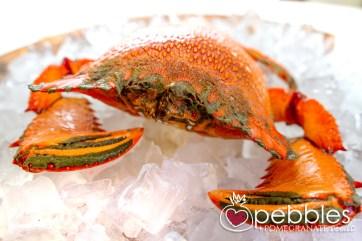 fraser-isle-spanner-crabs1