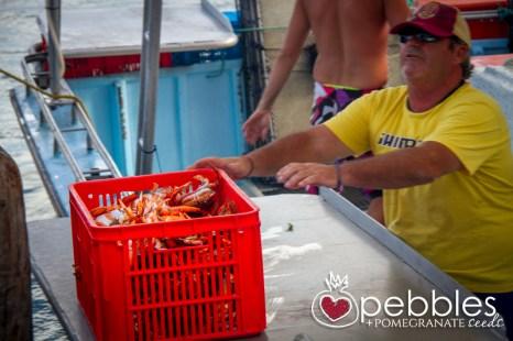 fraser-isle-spanner-crabs16