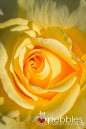 samaria-rose-farm34