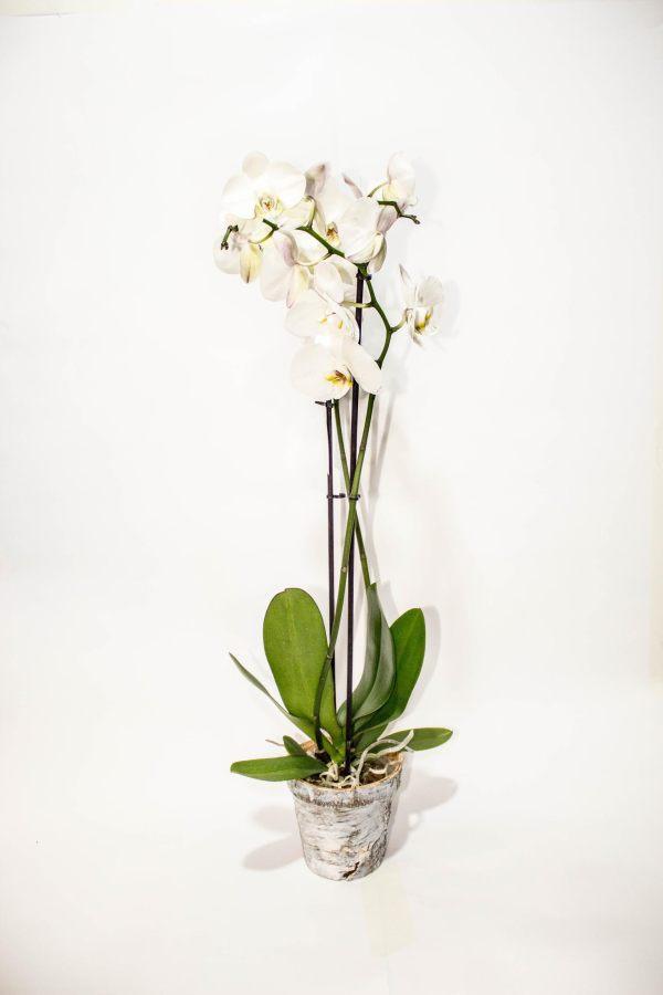Regalar flores a los que estrenan casa