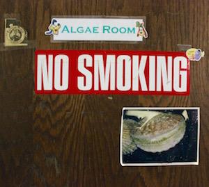 It All Begins in the Algae Room