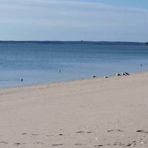 March 1, 9:30 a.m., Veterans Beach, Mattituck