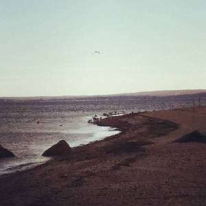 April 8, noon, Cedar Beach, Southold,