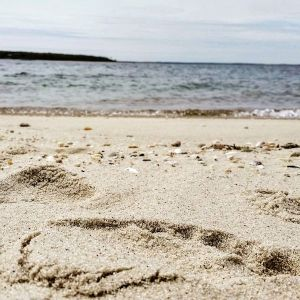 May 18, 10:30 a.m., New Suffolk Beach