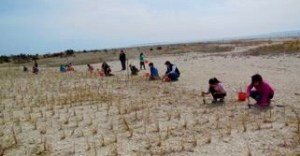 Dune Grass Planting on the North Fork