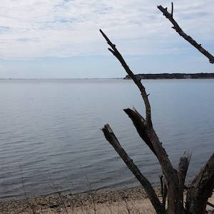 April 3, 11:10 a.m., Shinnecock Bay from Montauk Highway